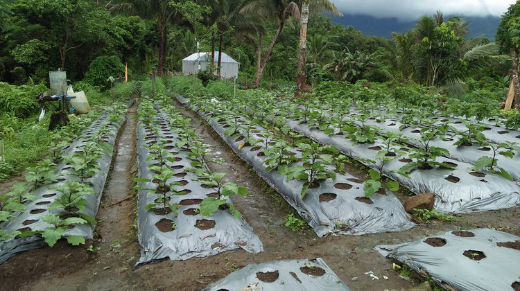 the area of high value vegetables of Lanawan Farmers Association